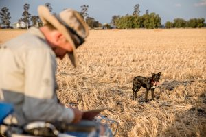 farmer and his dog in harvested paddock